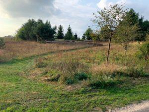 Baugrundstück(e) bei Rheinsberg
