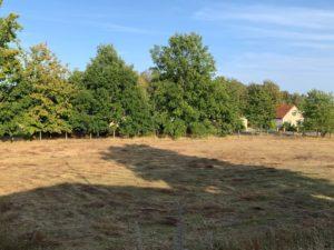 Baugrundstück in Mirow - Mecklenburgische Kleinseenplatte